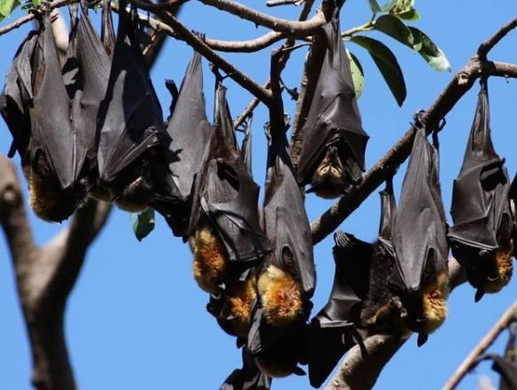 Invaders of bats