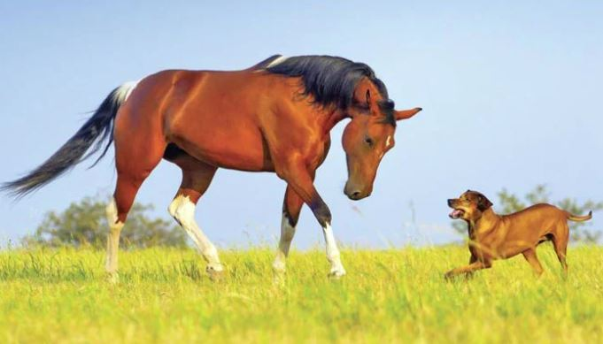 dogs,horse
