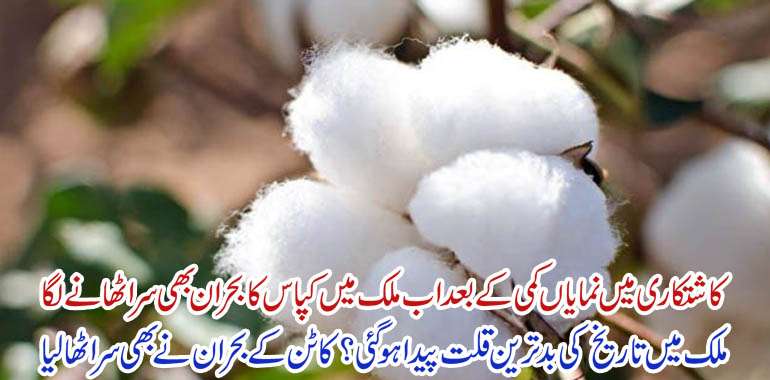 Decline in cotton cultivation