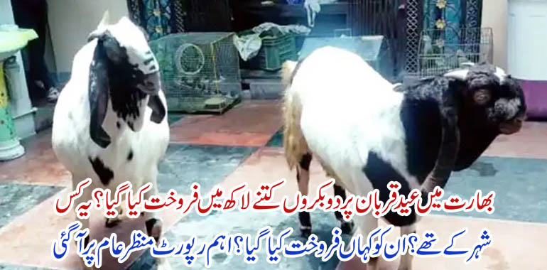 Goats sold for millions