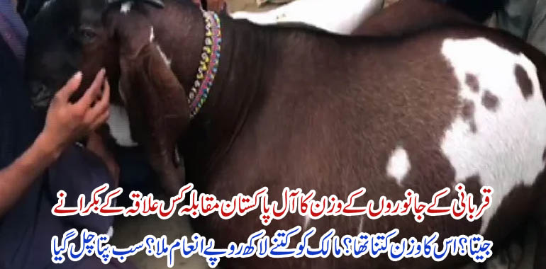 all pakistan animal Competition